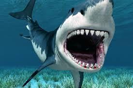 wall ideas shark wall art wooden shark wall art shark tooth