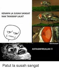 Astaghfirullah Meme - kenapa la susah sangat nak tangkap lalat 9gag malaysia