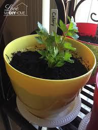 The Geranium On The Windowsill Just Died Celery On Your Windowsill Lettuce Rejoice Hometalk
