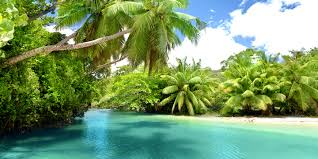 Cateracterum Palm by Big Cat Safari Dream Island Kenya Tanzania Seychelles Africa Point