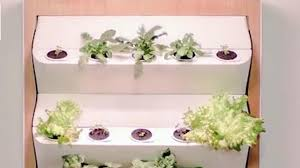 grow your own veggies with indoor vertical farm the weather channel