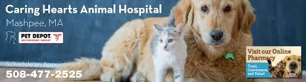caring hearts animal hospital mashpee ma