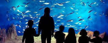 bureau vall la rochelle bureau vall馥 la rochelle 60 images aquarium argeles gazost 28
