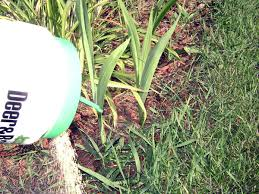 How To Get Rid Of Moles In The Backyard by How To Get Rid Of Ticks With These 6 Tips