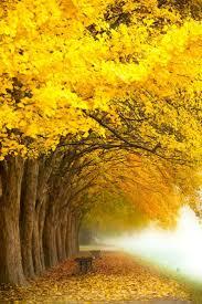 ray nesci bonsai nursery home 48 best herfstbeelden images on pinterest autumn fall autumn