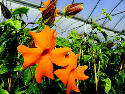 oklahoma native plants bustani plant farm grows something different archives