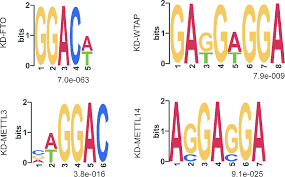 Meme Chip - sequence motifs of the dmm sites in mdrgenes the motifs were