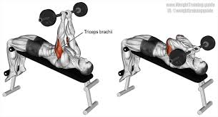 decline skull crusher an isolation exercise target muscle