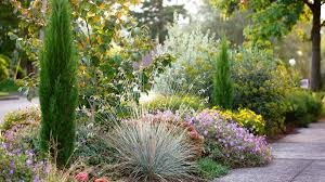 tips and tricks for road salt tolerant plants grow beautifully