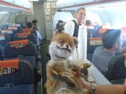 Taxidermy Fox Meme - taxidermy fox sitting picture el bassatine ouarzazate image
