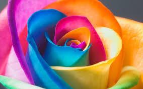 Multi Colored Roses Colorful Rose Wallpapers Gzsihai Com