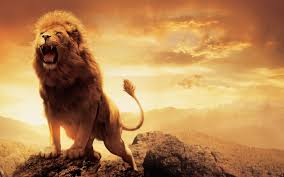 male lion wallpapers narnia lion aslan wallpapers hd wallpapers