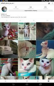 Cat Instagram 10 Best My Cat Instagram Raffaello Devon Rex Cat Images On