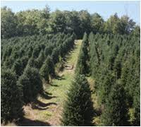 home moss tree farm