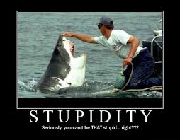 Meme Seriously - stupidity seriously you can t be that stupid funny