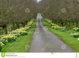 a beautiful road with flowers stock photo image 47388472