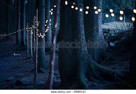 christmas lights tree trunk stock photos u0026 christmas lights tree