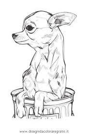 Épinglé par Cami Weaver sur Sew Cute  Pinterest  Chien Chihuahua