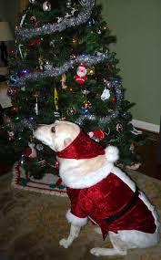 santa dog is coming to town mccalls 6259 mystitchnbitch