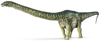 apatosaurus facts for kids apatosaurus dinosaur dk find out