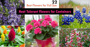 heat loving plants 22 best flowers for full sun heat tolerant flowers for containers