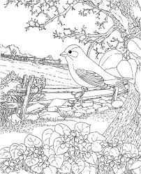 coloring spring colouring pages