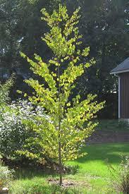 tree gallery tree northton