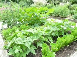 garden plans for vegetables that grow in partial shade the old