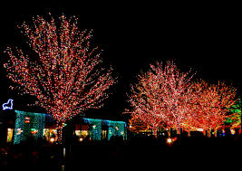 Stone Zoo Lights by 50 Splendid Pictures Of Chicago Lincoln Park And Zoo Places