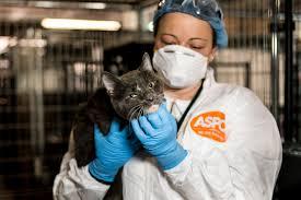 steve dale explains bird flu causing illness in new york cats