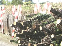 recycle christmas trees support local scouts