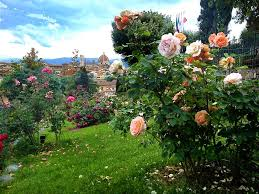 Enchanted Rose That Lasts A Year Gardens In Florence With A View Bardini Boboli Rose And Iris