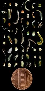 study guide the seafloor answer key 1204 best under the sea images on pinterest ocean life animals