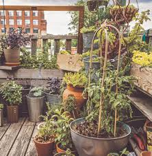 start a rooftop container garden brooklyn botanic garden