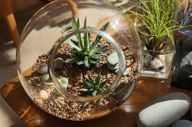 unusual terrarium containers with trendy sea stones and plant aloe