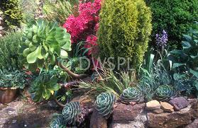 Rock Garden Succulents Succulents Are Ideal For Rock Gardens Walls And Banks