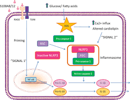 molecular and cellular mechanisms of cardiovascular disorders in