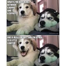 Benson Dog Meme - ink361 author at ink361 blog