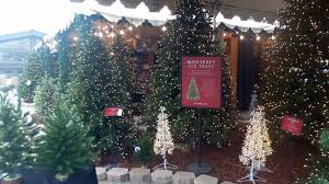 Natural Christmas Tree For Sale - garden center turned into christmas tree lot