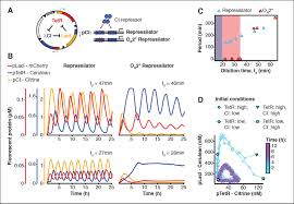 rapid cell free forward engineering of novel genetic ring