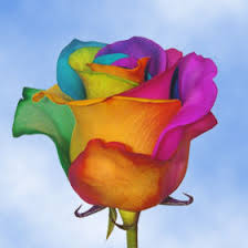 multi colored roses rainbow roses for sale free delivery rainbow colored roses