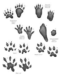 what kind of wild animals live near you go animal track hunting