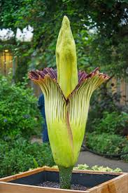 Types Of Botanical Gardens by 55 Best Chicago Images On Pinterest Chicago Chicago Illinois