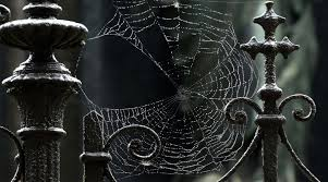 halloween spider web background 42 cool spider wallpapers hd creative cool spider backgrounds