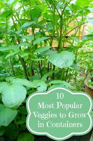 Vegetable Container Garden - best 25 container vegetable gardening ideas on pinterest