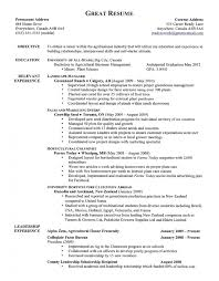 Qualities In Resume Neoteric Design Great Resume 7 A Great Resume Resume Example