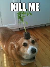Kill Me Meme - image 513157 kill me know your meme