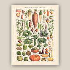 affiches cuisine de cuisine impression légumes plantes médicinales