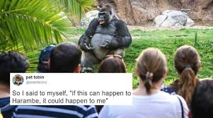Gorilla Memes - twitterati found a gorilla giving ted talk and then the funniest