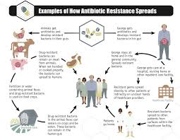 examples of how antibiotic resistant bacteria spread credit u2013 cdc